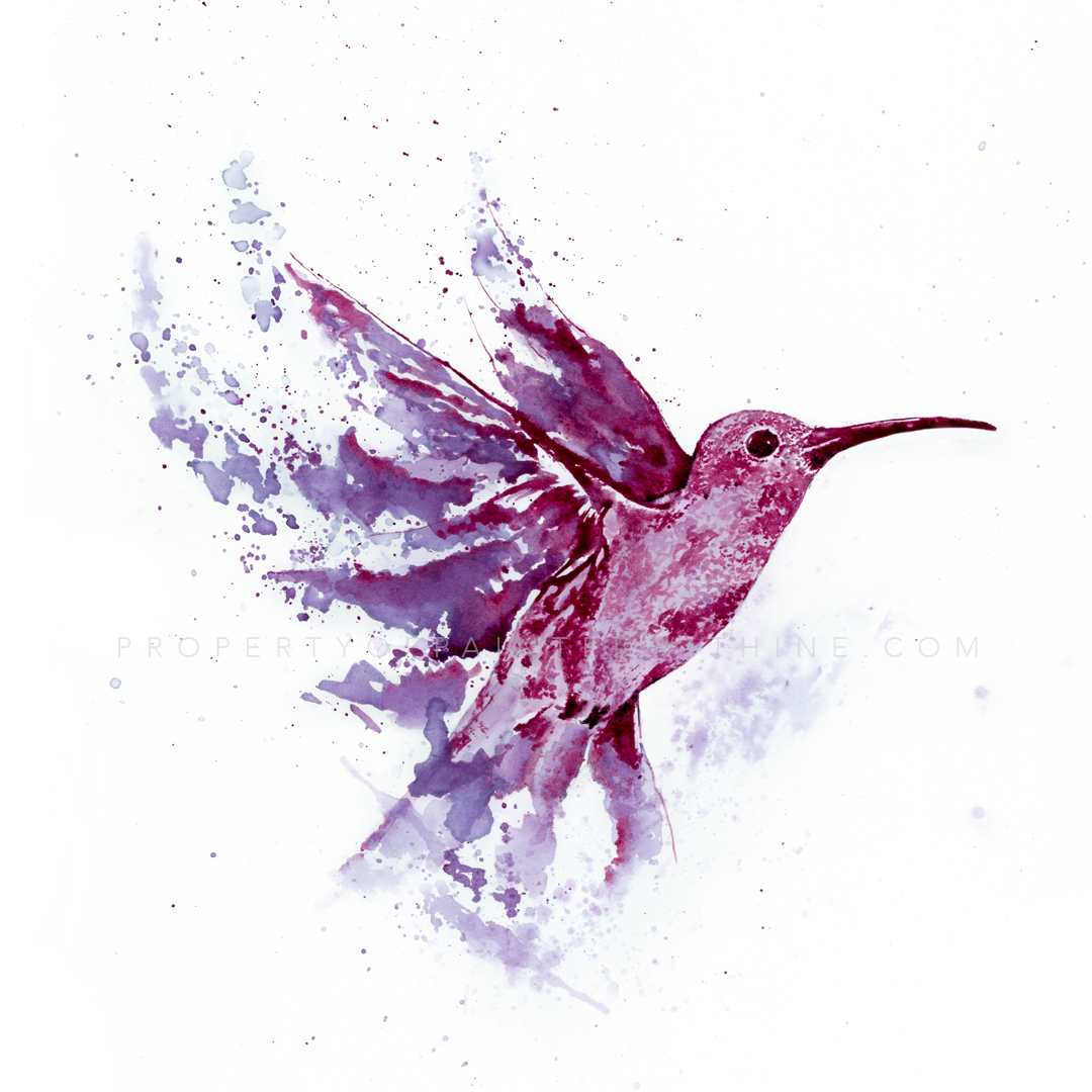"Hummingbird ""le colibri"""