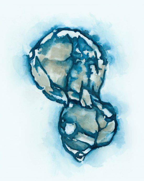 KristenSmith-WatercolourEmbryo